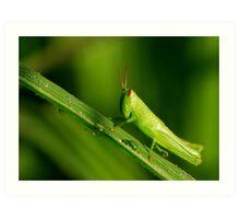 new-born grasshopper Art Print