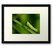 new-born grasshopper Framed Print
