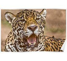 Jaguar portrait Poster