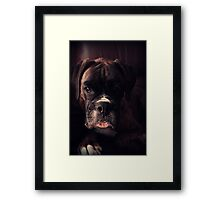 Portrait Of A Female Boxer Framed Print