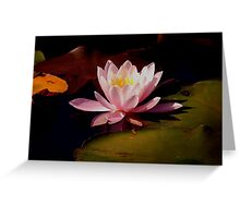 PINK WILD WATER LILLY Greeting Card