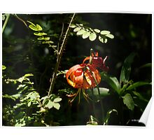 Leopard Lily Poster