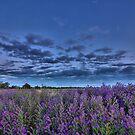 Purple haze by Mark Cooper