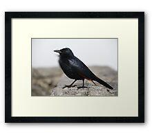 Another Cape Town Bird Framed Print