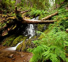 Fern Falls by Dale Lockwood