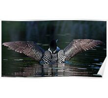 I once caught a fish....Common Loon Poster