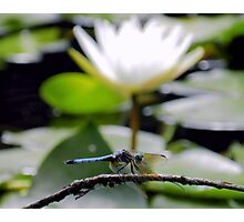 Dragonfly & White Lily Photographic Print