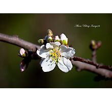 Spring Blossoms and Buds Part 1 Photographic Print