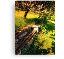 Old bench, old trees, old scenery Canvas Print