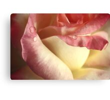 The Beauty Of The Rose.... Canvas Print
