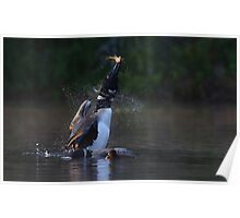 Pisces Rising - Common loon with fish Poster