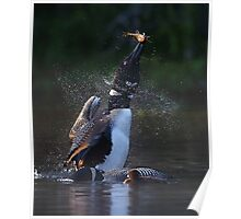 Pisces Rising 2 - Common Loon Poster