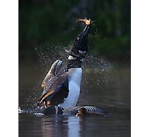 Pisces Rising 2 - Common Loon Photographic Print
