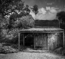 Shed by Jan Pudney