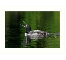 Call of the loon - Common Loon Art Print