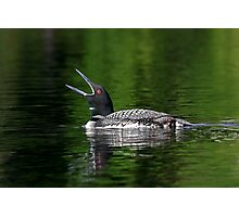 Call of the loon - Common Loon Photographic Print