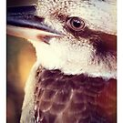 Kookaburra by Rookwood Studio ©