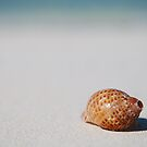 Monu Shell by Heath Carney