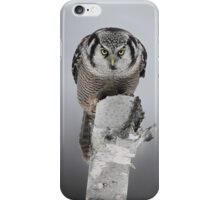 Hawk on log portrait - Northern Hawk Owl iPhone Case/Skin