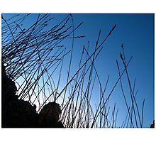 Flexible Photographic Print
