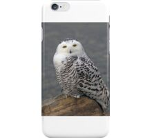 Owl on the Rocks - Snowy Owl iPhone Case/Skin