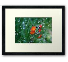 Orange Brush Framed Print