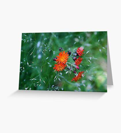 Orange Brush Greeting Card