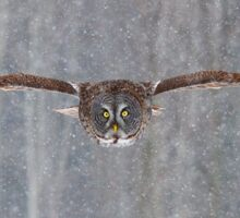 Full speed - Great Grey Owl Sticker