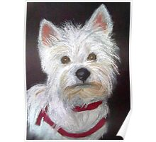 Little White Terrier Poster