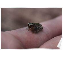 Micro Frog Poster