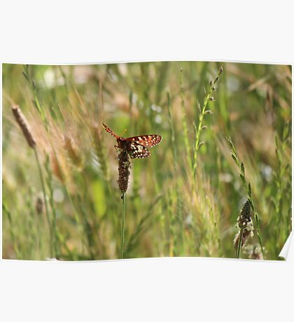 Butterfly Perched on Weed Poster