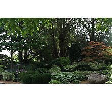 Loch Ness Monster In The Garden ? Photographic Print