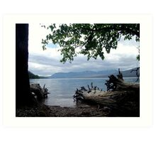 TREES WITH TOES, LAKE MC DONALD, GLACIER NATIONAL PARK Art Print