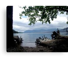 TREES WITH TOES, LAKE MC DONALD, GLACIER NATIONAL PARK Canvas Print