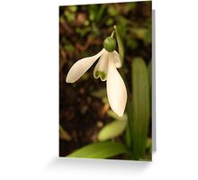 First Snowdrop of the Season 2012©Linda Scott Greeting Card