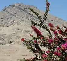 Cerro Blanco by SierraMLatkje