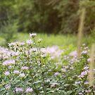 Purple Flower Field by Kendra Kantor