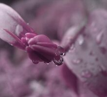 After the rain_purple by ciriva