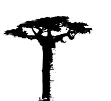 Embrace the tree (baobab) by alphaville