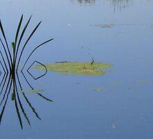 Symmetry by Hans Bax
