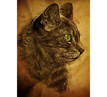 The Great Cat Photographic Print