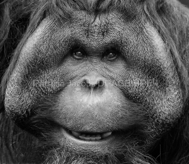 Chubby Chops by Patricia Jacobs CPAGB LRPS BPE3