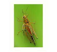 The beautiful grasshoper Art Print