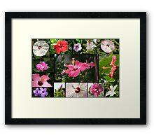 Say Hi to Hibiscus Framed Print