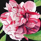 Single Red Peony Rose by Esmee van Breugel