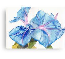 Blue Bindweed Canvas Print