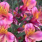 Flowers by Dorthy Ottaway