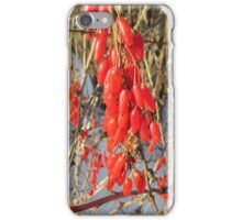 berries of barberry iPhone Case/Skin