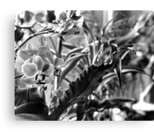 I pass'd by his garden Canvas Print