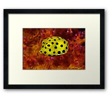 Yellow cube on red coral Framed Print
